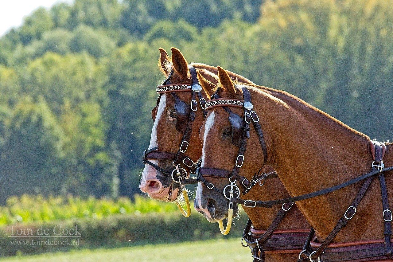 Paarden Hulsberg